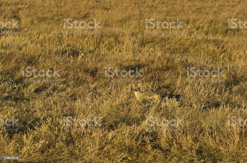Perfect camouflage stock photo