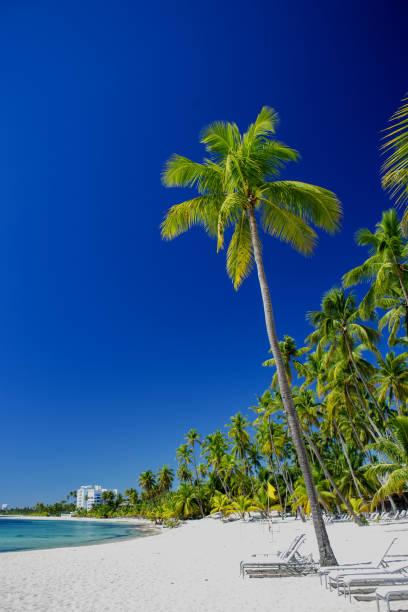 perfect caribbean beach - pirania zdjęcia i obrazy z banku zdjęć