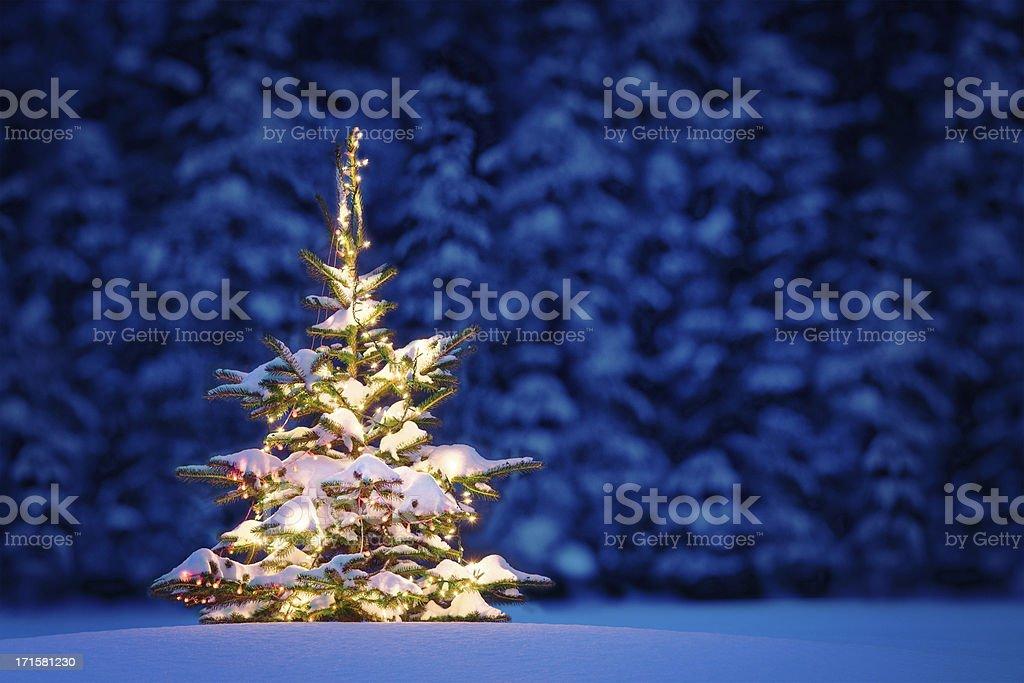 Perfect Christmas royalty-free stock photo