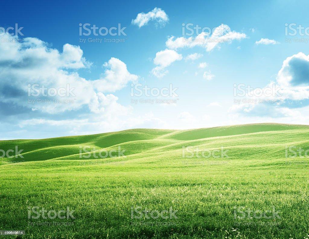 Perfecta campo de hierba de primavera - foto de stock
