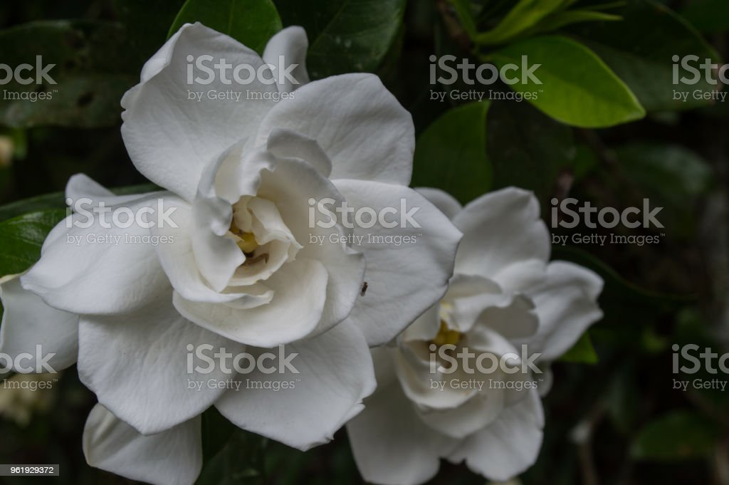 perfect flower stock photo