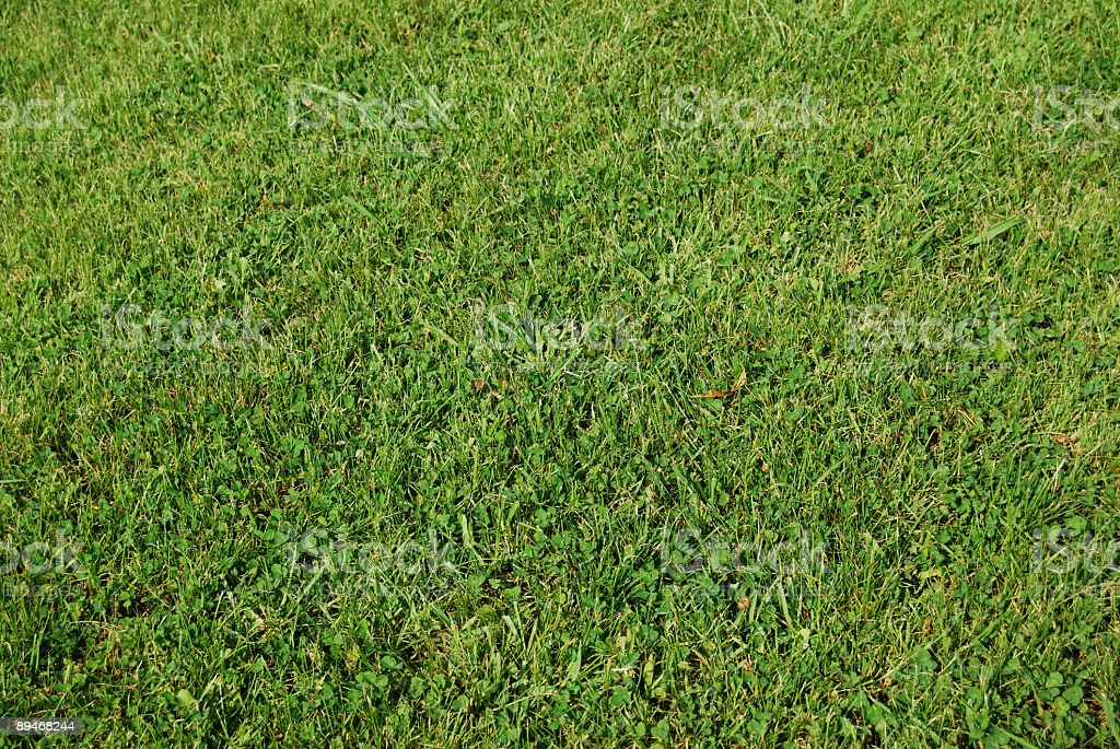 Perfect Grass ( Raw ) royalty-free stock photo