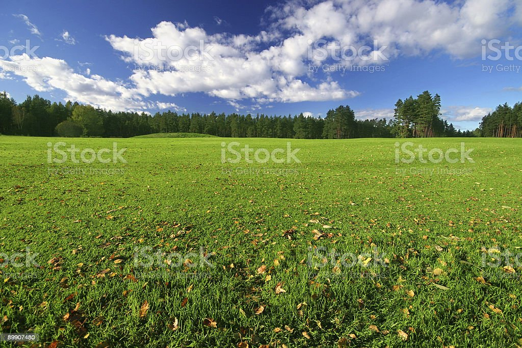 Perfect green field on sunny day royalty-free stock photo