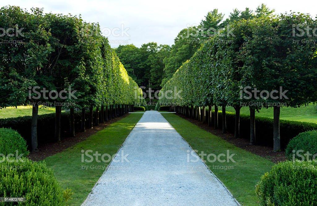 Perfect Hedges stock photo