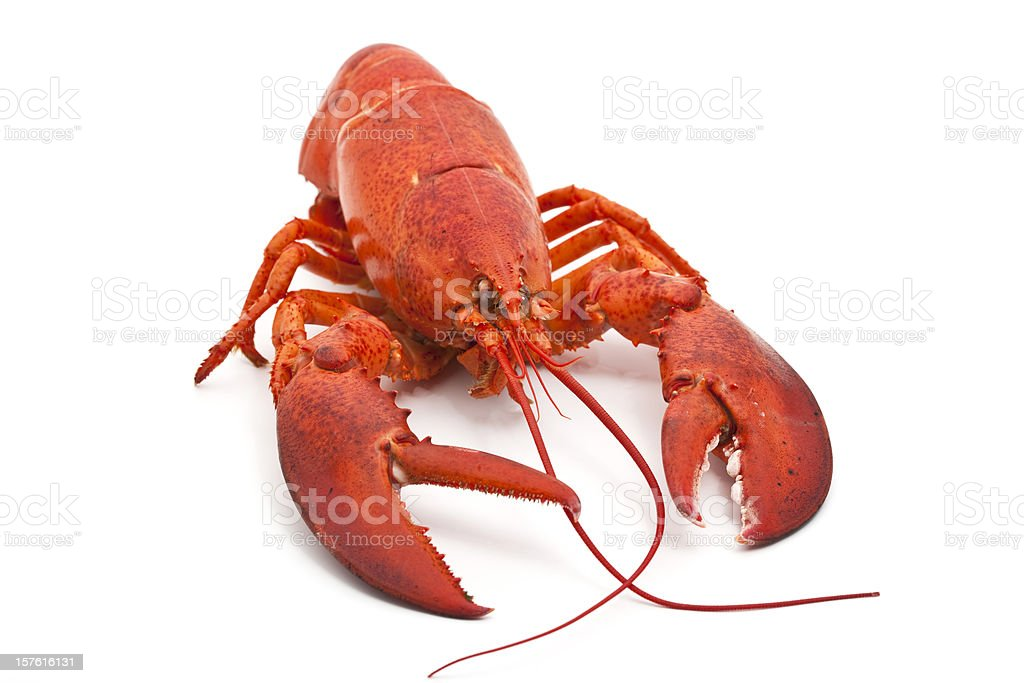 perfect lobster royalty-free stock photo