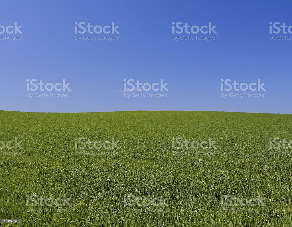 perfect meadow royalty-free stock photo