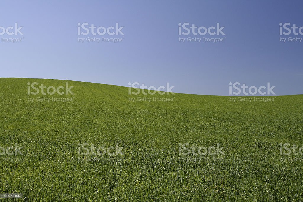 perfect meadow  #2 royalty-free stock photo