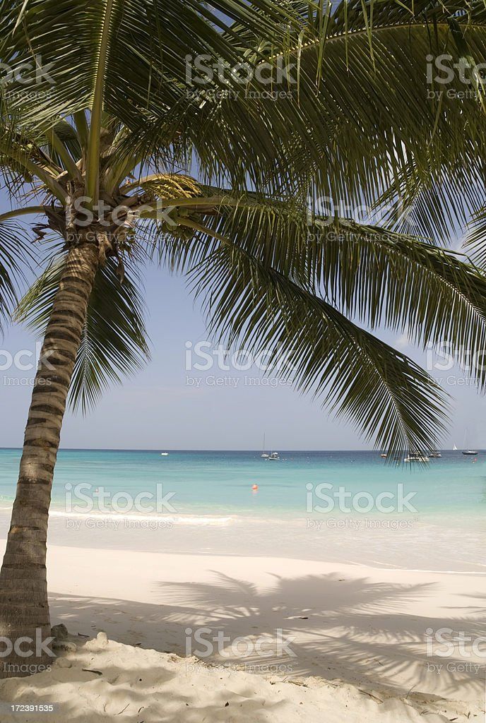 Perfect Palm royalty-free stock photo