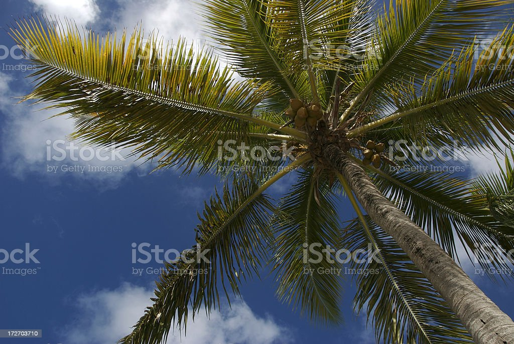Perfect Palm stock photo