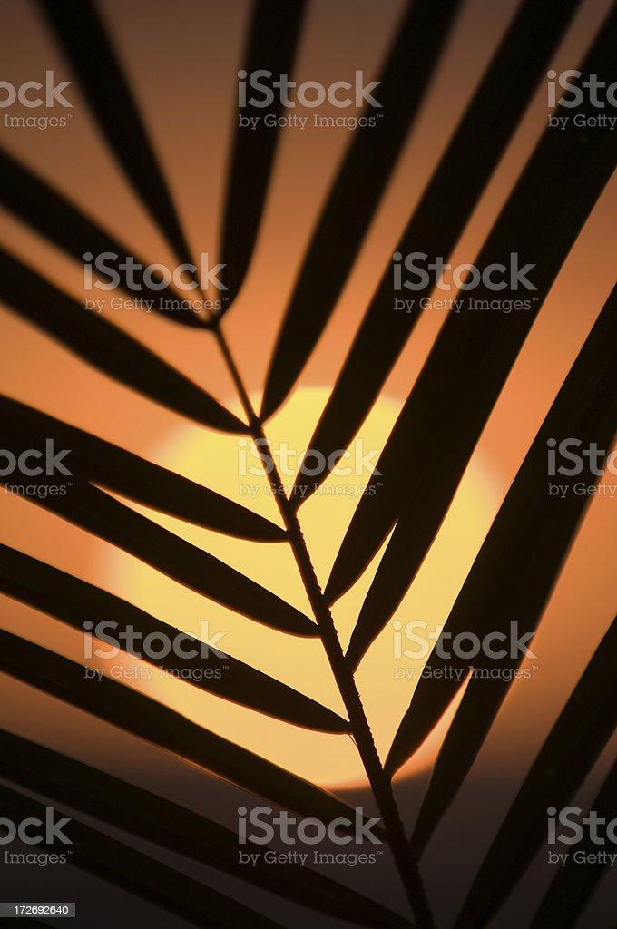 Perfect Palm Sunset royalty-free stock photo