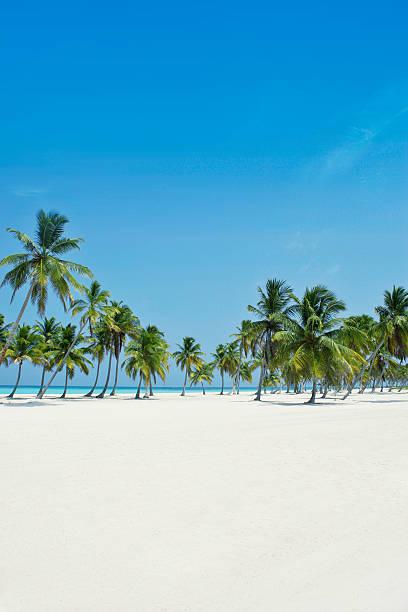 Perfect paradise stock photo