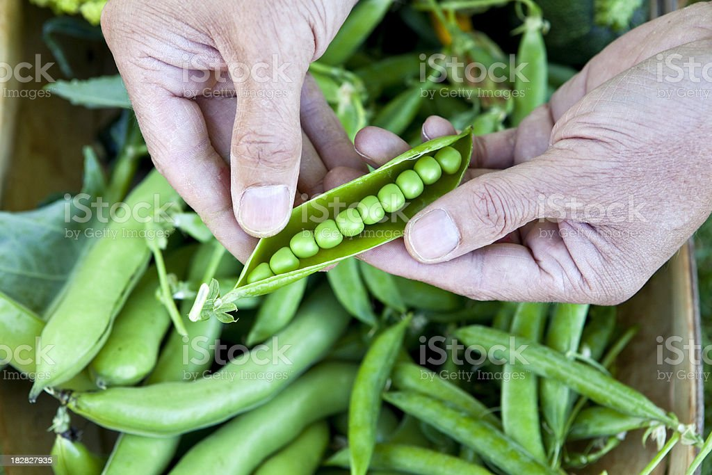 Perfect Peas in a Pod royalty-free stock photo