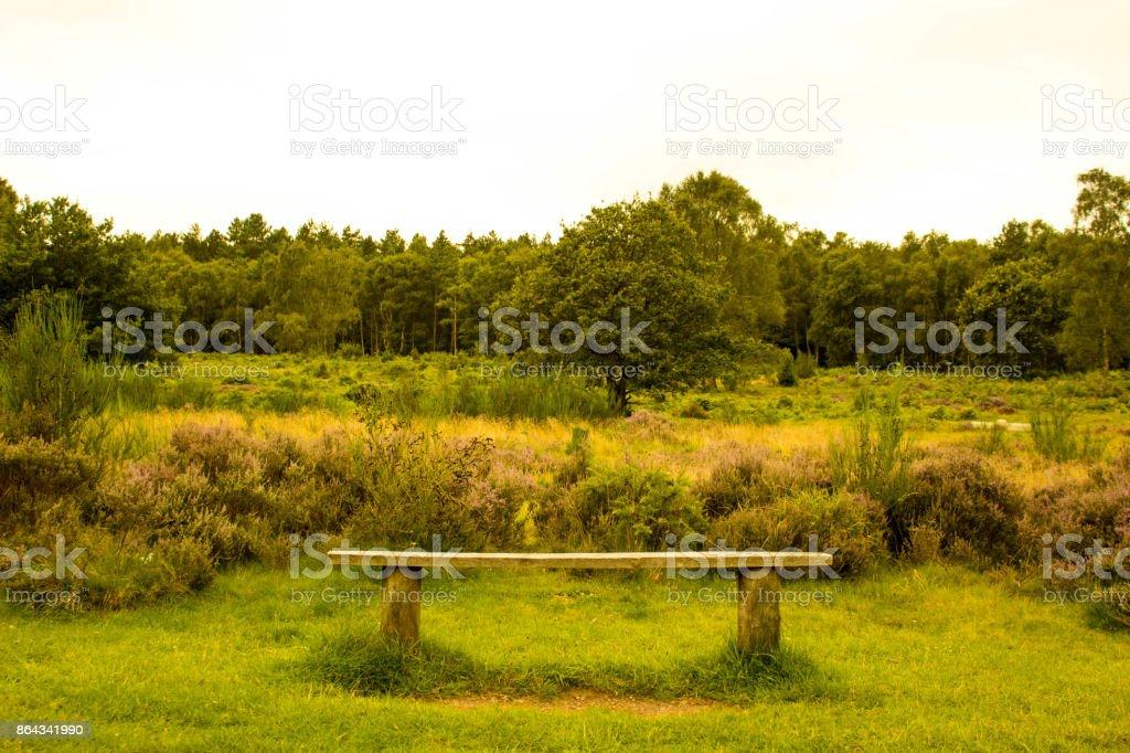 Perfect Picnic Location stock photo
