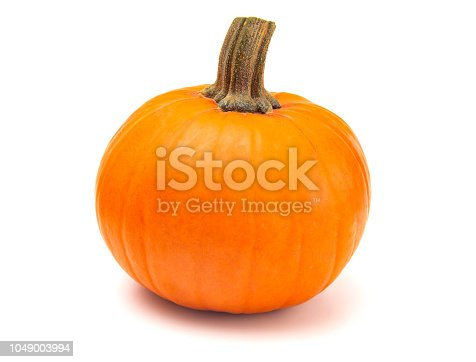 A Perfect Pumpkin For Making into a Pie