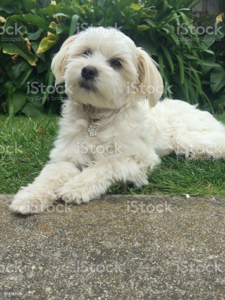 Perfect Puppy stock photo