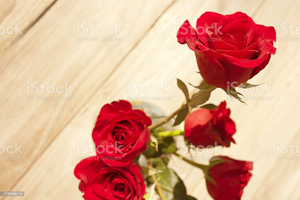 Perfect Red Rose Outdoors, Wood Background stock photo