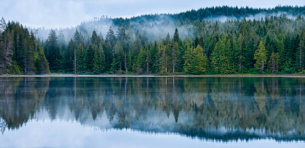 Perfect Reflection of Misty Forest in Lake stock photo
