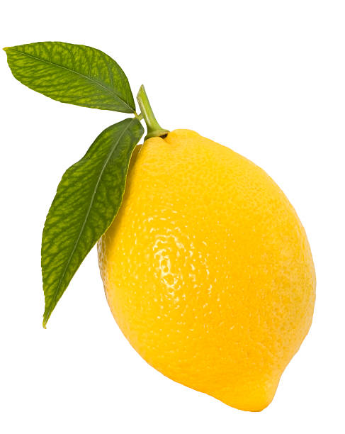 Perfect shape lemon with two leaves stock photo