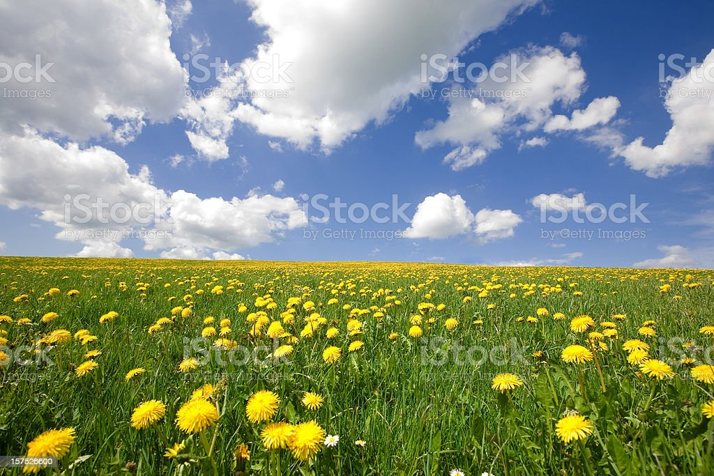 perfect sky with blooming spring meadow - bavaria germany royalty-free stock photo