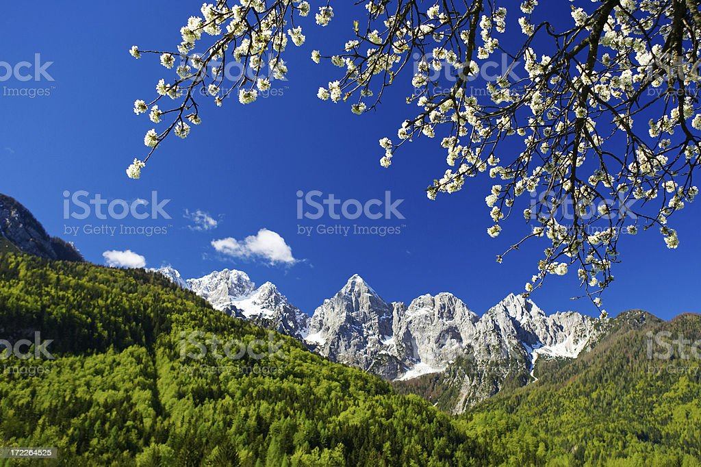 Perfect Spring Weather royalty-free stock photo