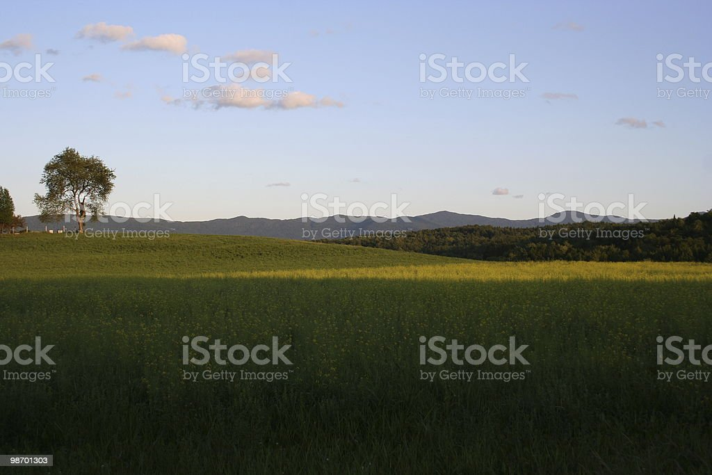 Perfect Summer Afternoon royalty-free stock photo