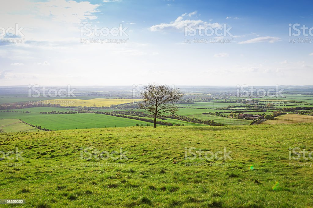 Perfect summer landscape royalty-free stock photo