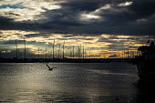 Perfect sunset and flying seagull in Pendik Marina, İstanbul