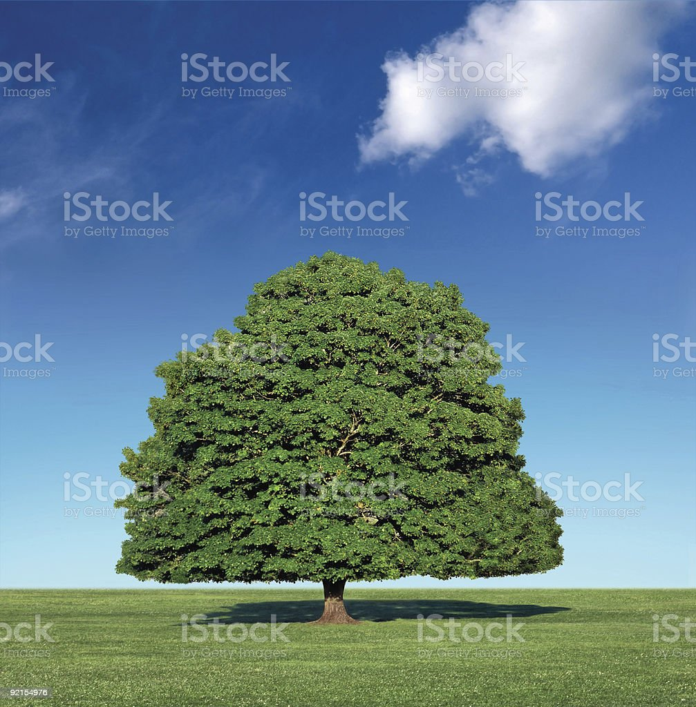 perfect tree and blue sky stock photo