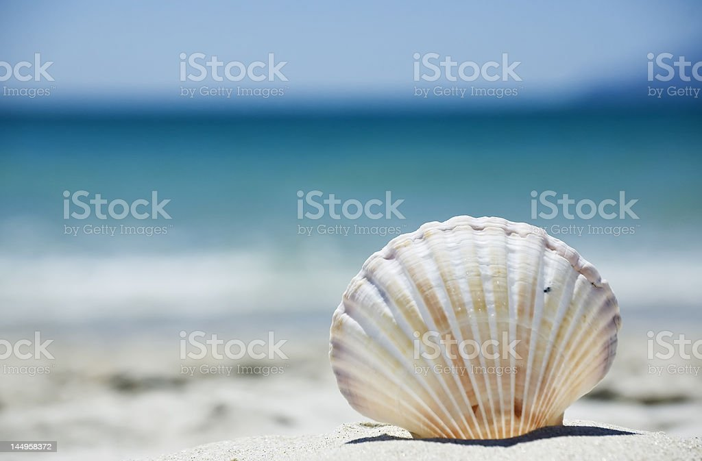 Perfect vacation on the beach royalty-free stock photo