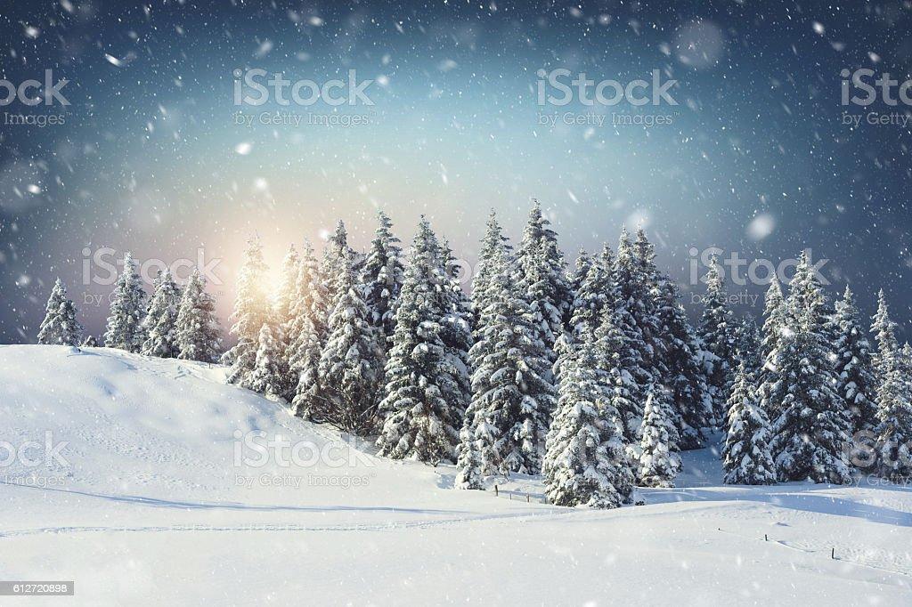 Perfect winter sunrise – Foto