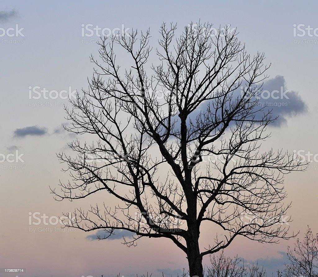 Perfect Winter Tree royalty-free stock photo