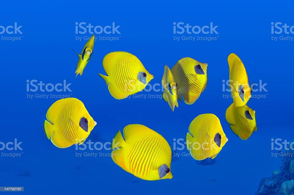 Perfect yellow stock photo