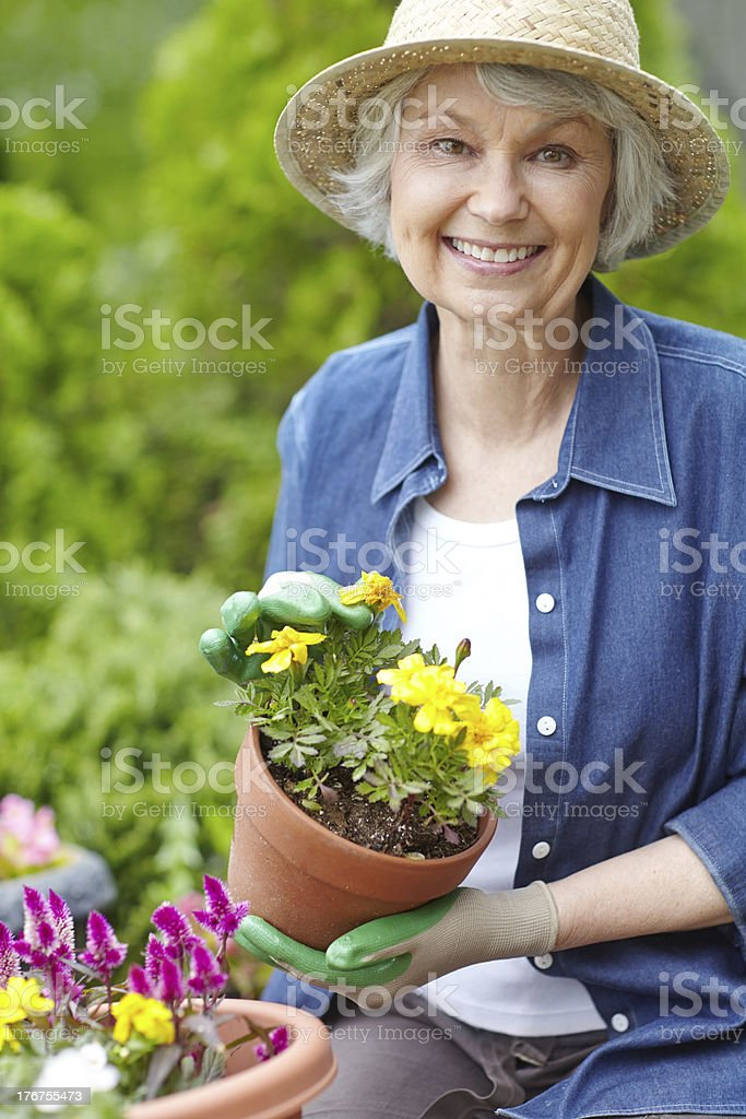 Perfectly potted flowers royalty-free stock photo