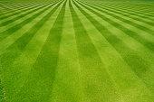完璧なストライプ新鮮な 刈られました。 ガーデンの芝生