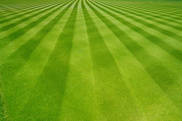 perfectly striped freshly mowed garden lawn - gestreept stockfoto's en -beelden