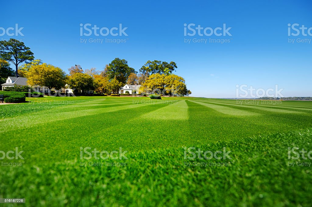 Perfectly striped freshly mowed garden lawn stock photo
