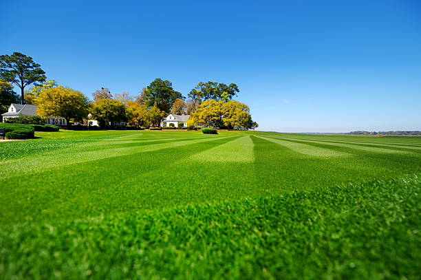 perfectly striped freshly mowed garden lawn - vanishing point stock pictures, royalty-free photos & images