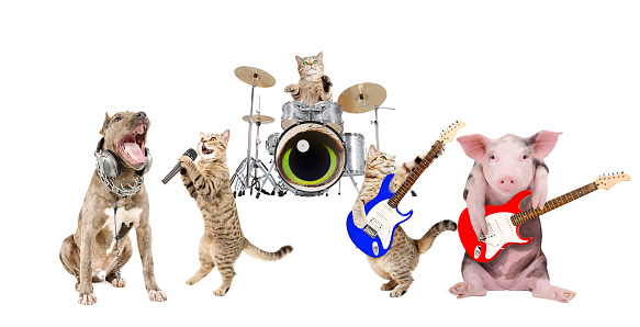 Performance of animals musicians. Isolated on white background