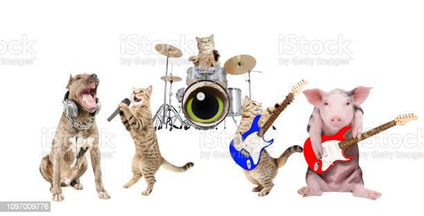 Performance of animals musicians picture id1097009776?b=1&k=6&m=1097009776&s=612x612&h=mz8jizodhzth1i0zca9xtqbjoe6qts7ez2xemmbps6i=