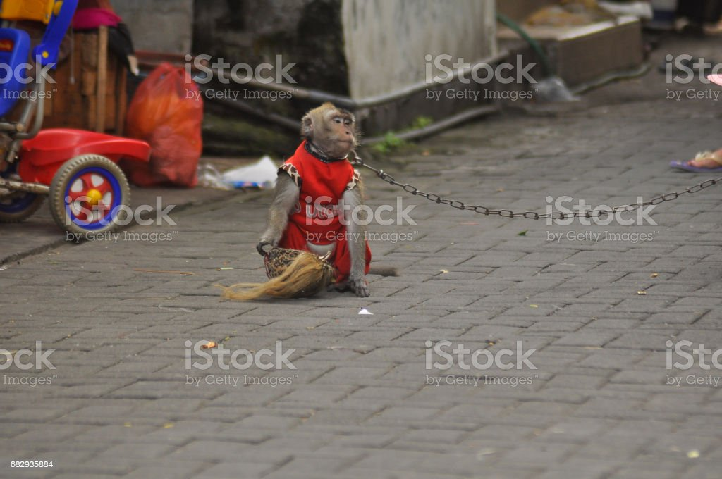 Performances of monkey masks royalty-free stock photo