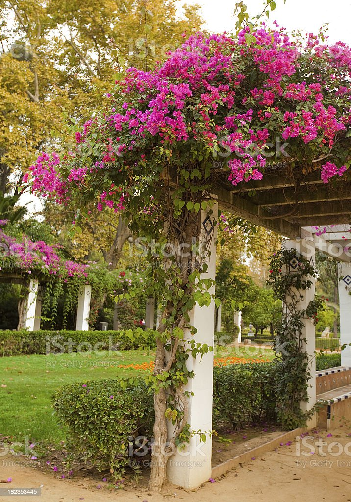 pergola royalty-free stock photo