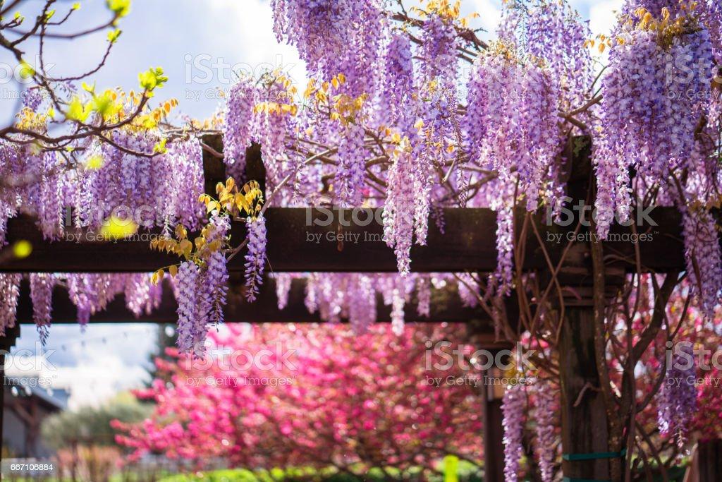 Pergola with flowers stock photo