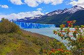 Perito Moreno Glacier and red wildflowers, Lake Argentino – El Calafate, Patagonia Argentina