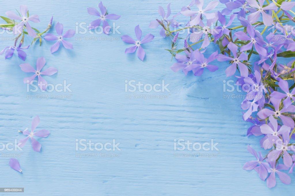 Periwinkle flowers on a wooden background zbiór zdjęć royalty-free