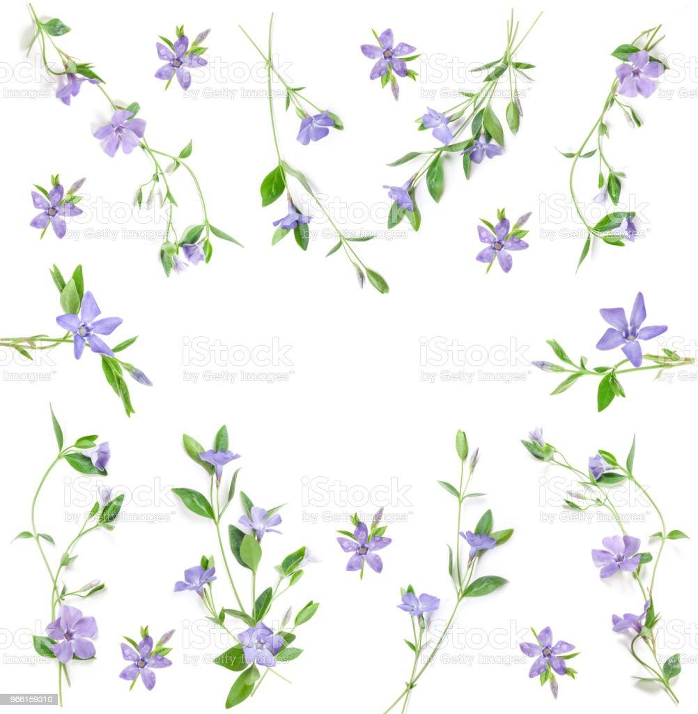 Maagdenpalm bloemen - Royalty-free Blad Stockfoto