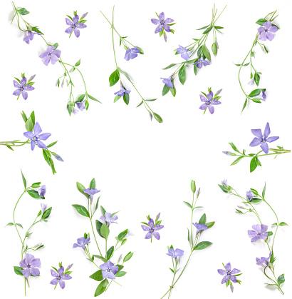 Maagdenpalm Bloemen Stockfoto en meer beelden van Blad