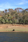 Periyar lake and Wildlife Sanctuary, Thekkady, Kerala, India