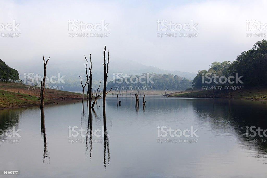 Periyar Lake Reserve royalty-free stock photo
