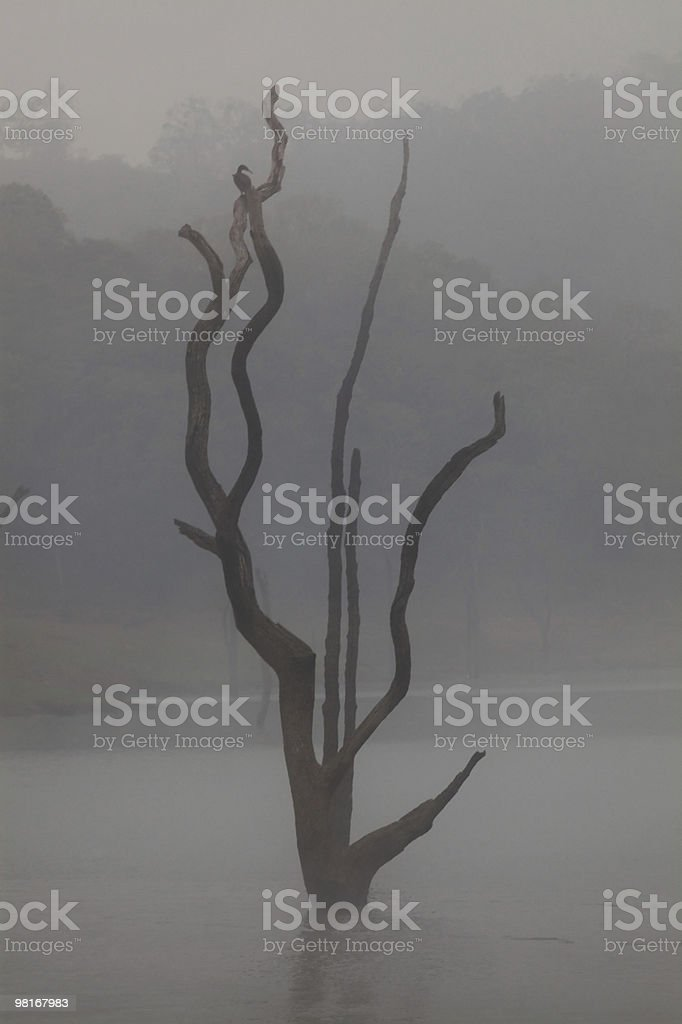 Periyar Lake Reserve royalty-free stock photo