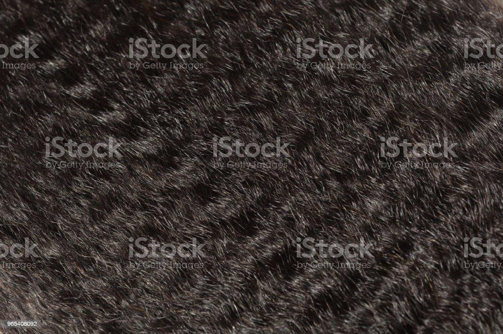 permed 변 태 똑바로 조 악한 아프리카 스타일 블랙 인간의 머리 확장 번들을 치 게 되죠 - 로열티 프리 0명 스톡 사진